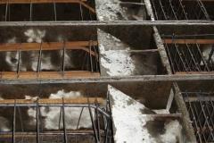 ЖБК-5. 2008 р.  Формування вістря паль